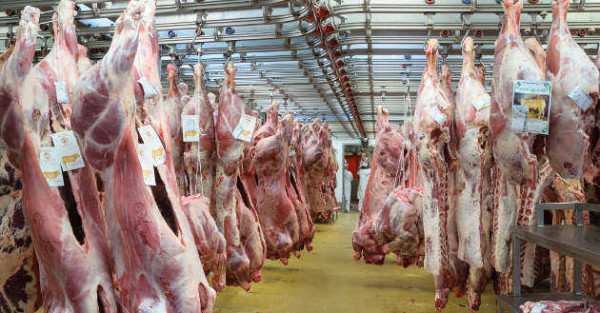 industrie-viande-abattoir-carnage