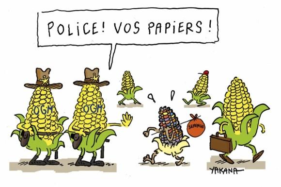 mais-ogm-semences-paysannes
