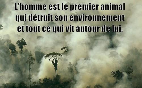 homme-detruit-environnement