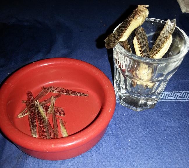 indigne-du-canape-a-lucha-libre-insectes-sauterelles-grillons-criquets