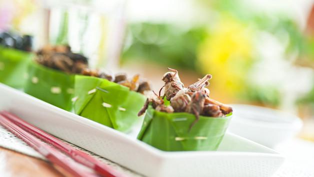 les-insectes-sont-de-bonnes-sources-de-proteines