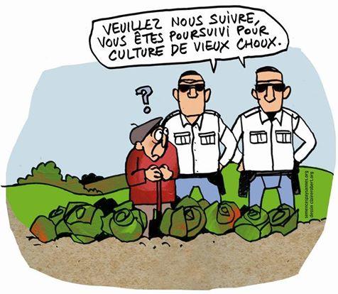 semences-paysannes-interdites